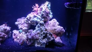 reef tank aquarium fish tank