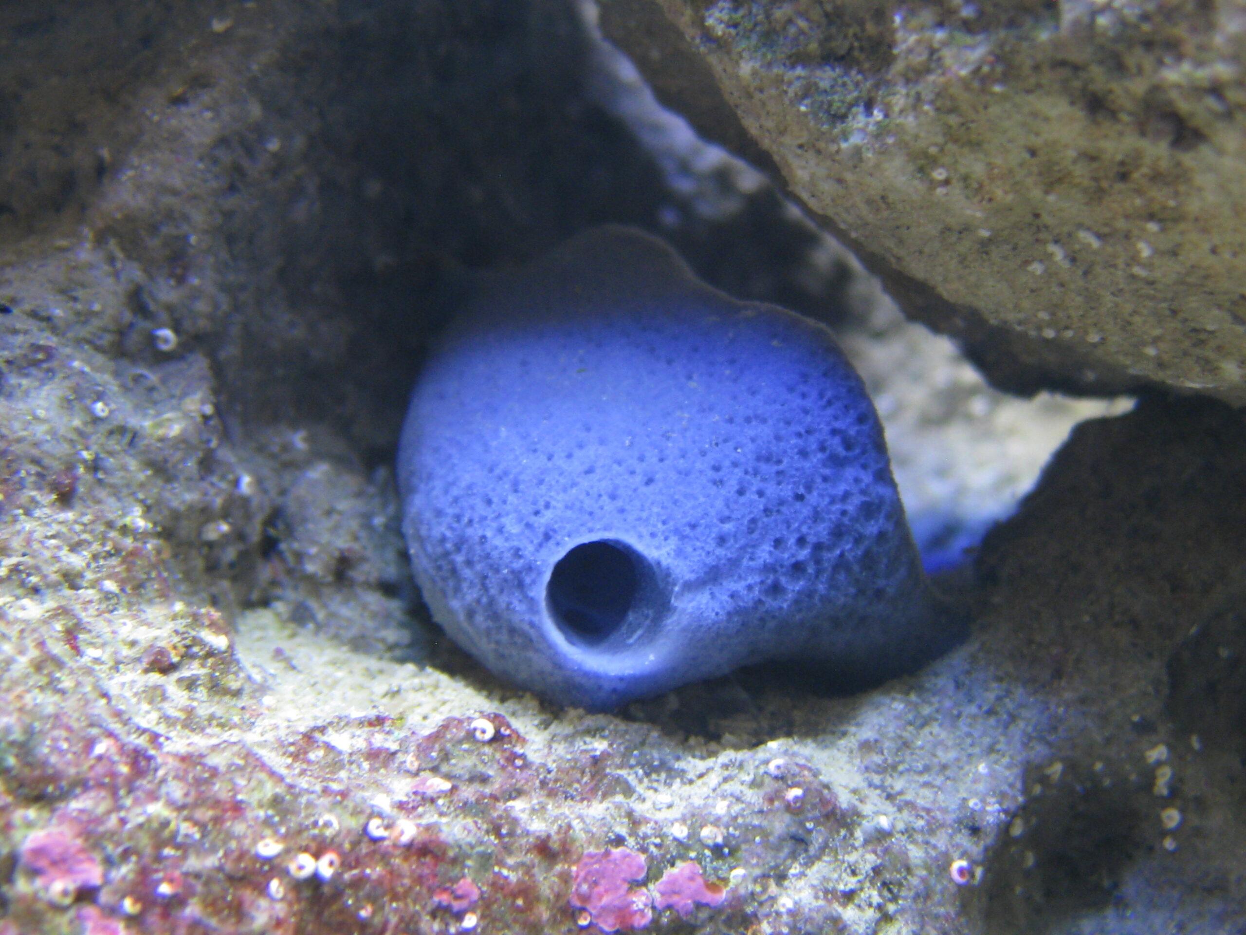 reef sponges