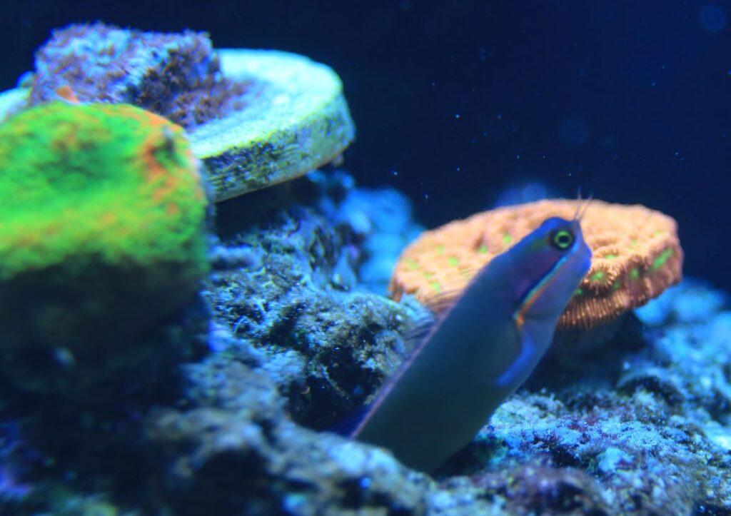 Best community reef fish