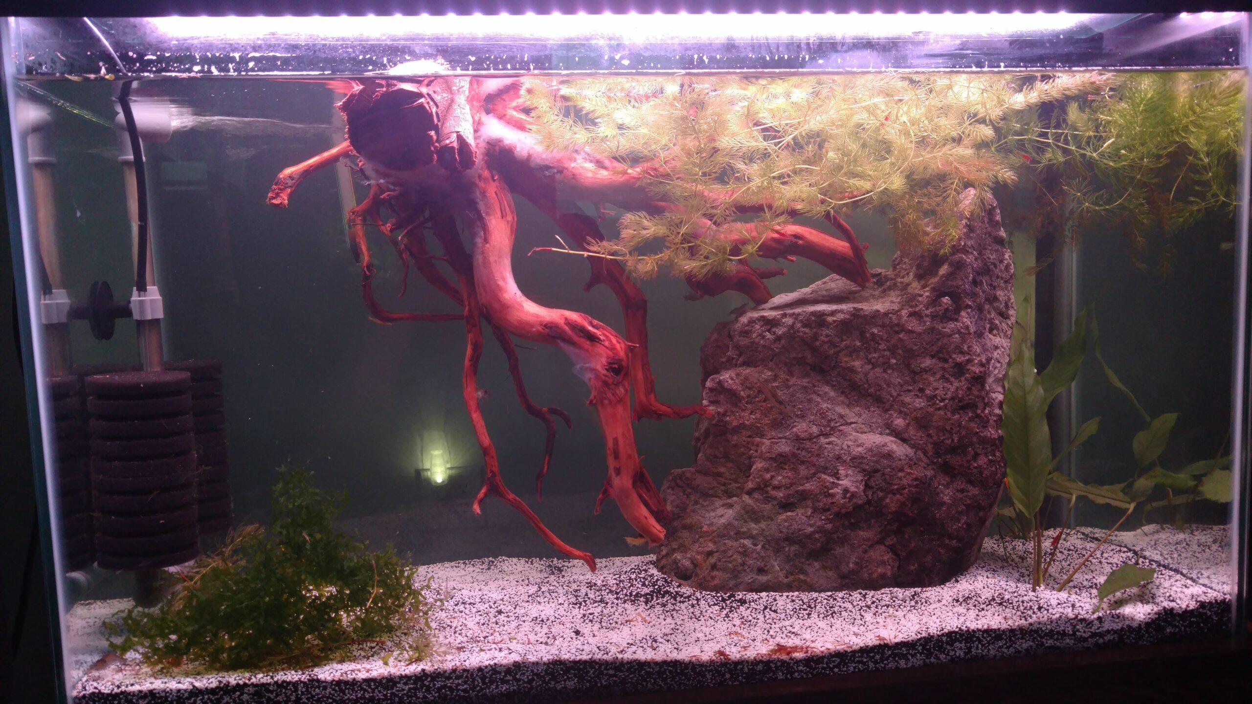 Freshwater shrimp tank setup