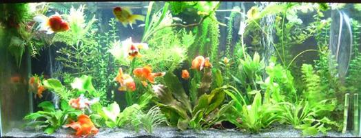 best freshwater sand for plants