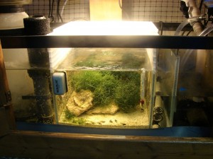 Best refugium design