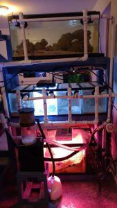 saltwater aquarium system setup