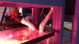 plumb aquarium sump filter