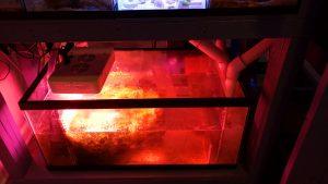 reef refugium sump aquarium