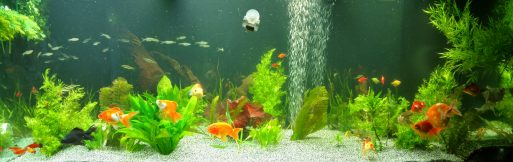 best aquarium websites