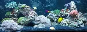 fish tank websites