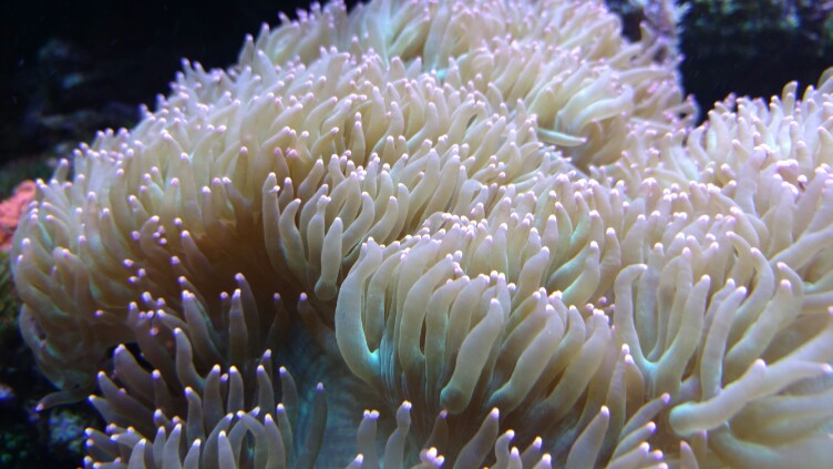 introduction to coral care