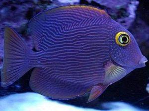 best ways to control nitrate and phosphate in a reef tank aquarium