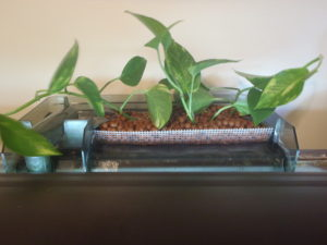 HOB filter growing plants