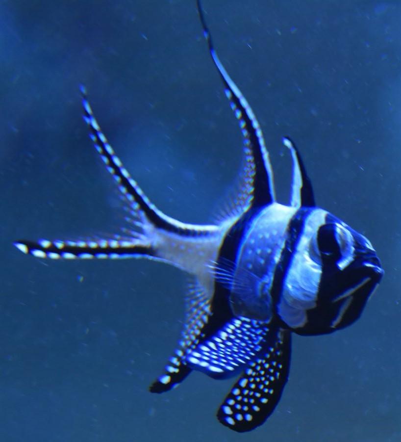 Hardiest best beginner saltwater fish