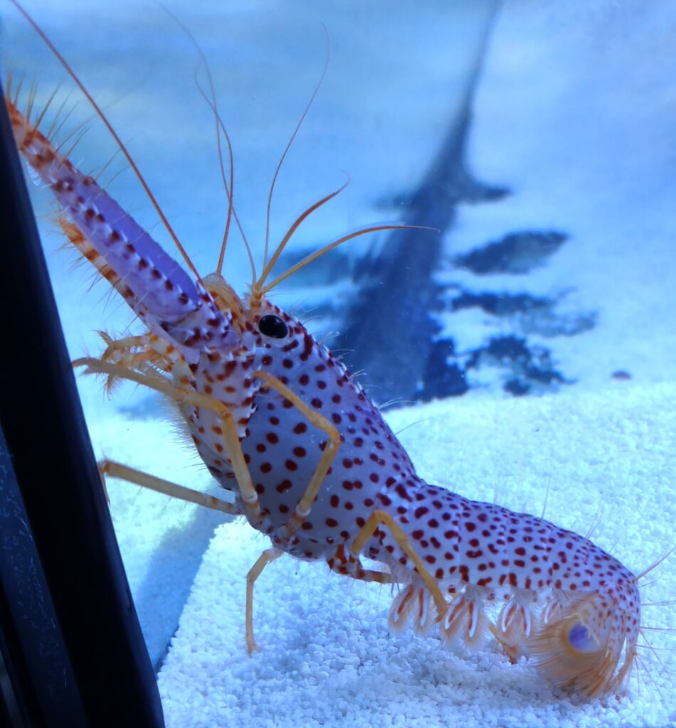 Reef-safe invertebrates
