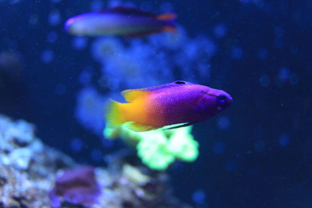 best nano reef fish