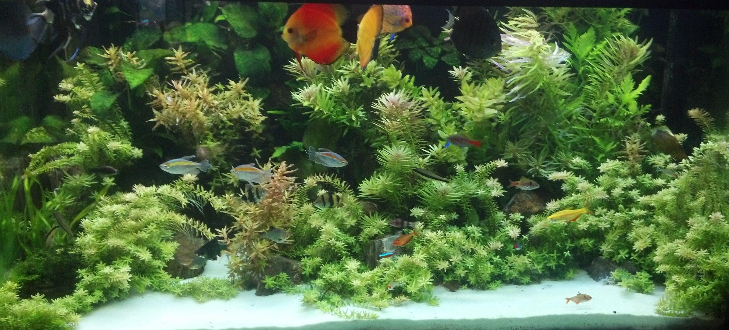 Best fertilizers fertilizer for planted aquariums tanks