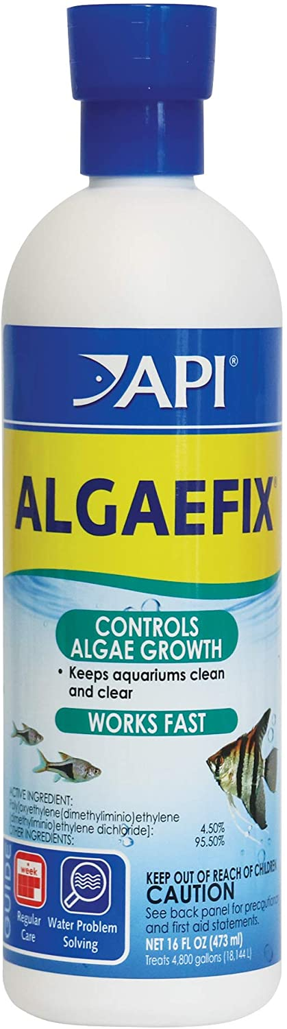 best way to get rid of algae in an aquarium naturally freshwater planted
