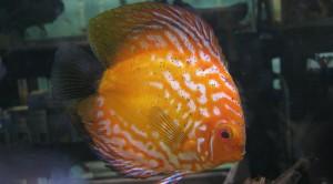 orange-discus-bg